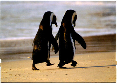 aww, beach, couple, cute, love, penguins