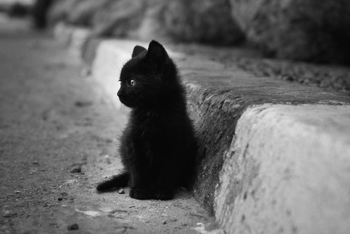 baby, baby cat, black and white, cat, cute - image #272189 ...
