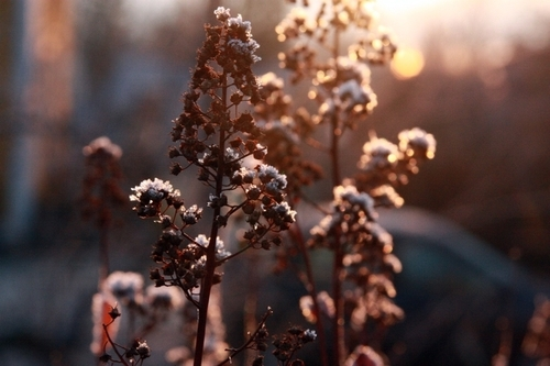 beautiful, blossom, blossoms, cold, color, colorful, colors, december, floral, flower, flowers, nature, photography, pretty, snow, winter