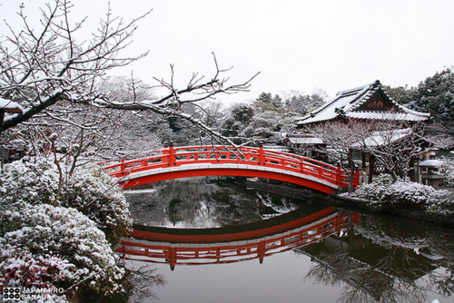 beautiful, bridge, japan, kyoto, nature, snow
