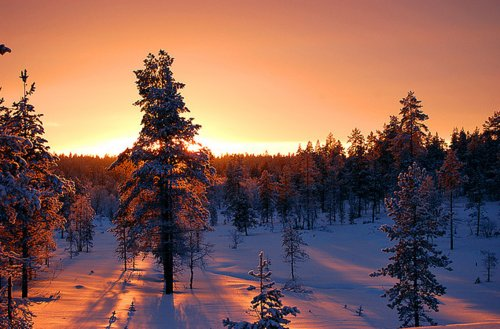 beautiful, evergreen, snow, sunrise, sunset