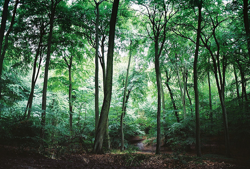 beautiful, forest, gren, hipster, indie, nature, photo, photography, sofis, trees, woods