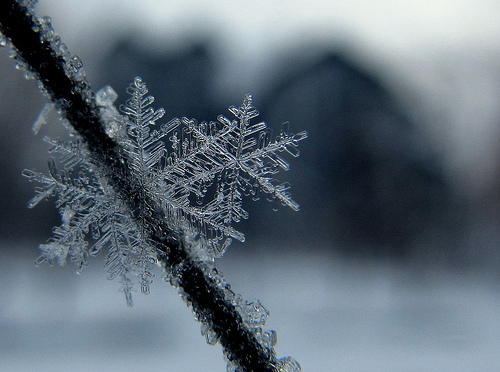 beautiful, ice, photography, snow, snowflake