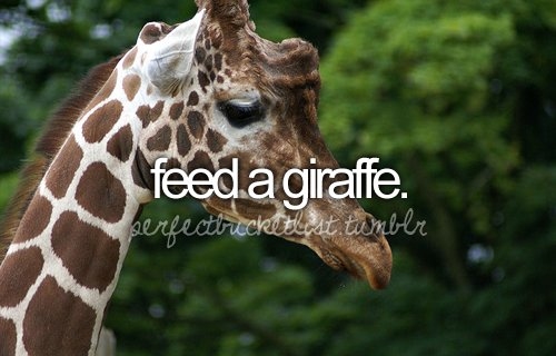 before i die, bucketlist, giraff