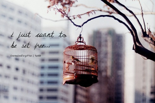 bird, birds, cage, desire, fly, fly away, free, freedom, goals, life, nature, photography, text