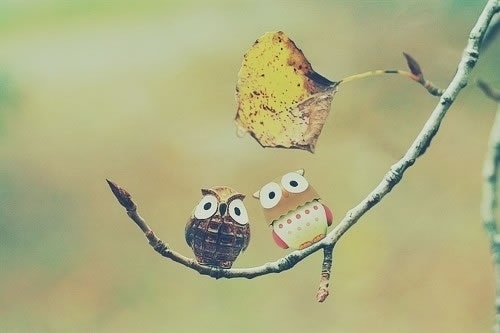 birds, creative, cute, friendship, love
