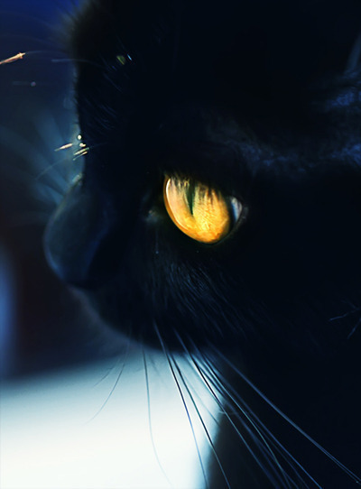 black, cat, cool, cute, eye