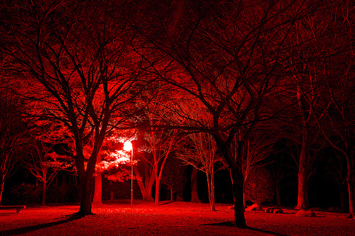 bosque, florest, night, red, tree, vermelho, woods