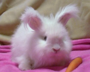 bunny, cute, fluffy, pink, pushy