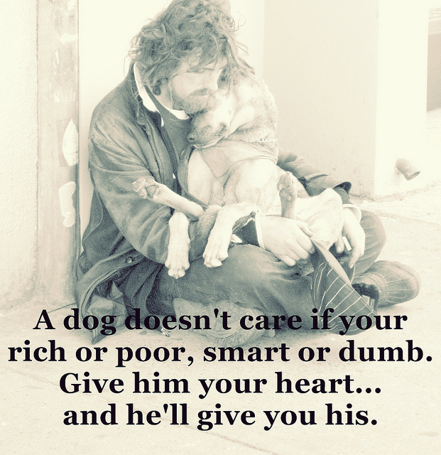 care, dog, dumb, heart, homeless