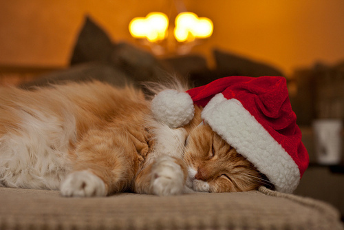 cat, christmas, cute, enjoy, lights