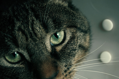 cat, cool, cute, eye, fashion, good, makeup, model, photo, photography, pretty, sexy, style