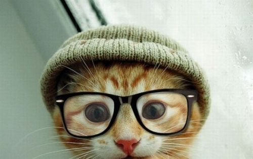 cat, cool, cute, fashion, good