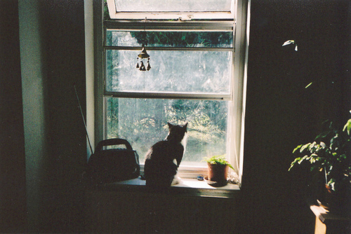 cat, cute, indie, photography, window
