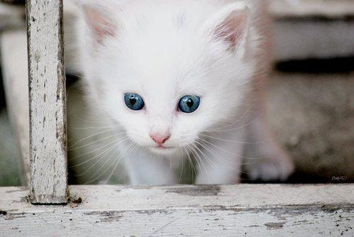 cat, cute, kitten, lazy eye, photo