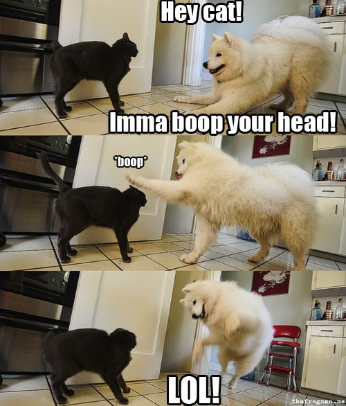 cat, dog, funny, giggle, haha, laugh