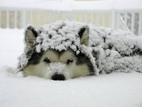 cold, cute, dog, fluffy, snow