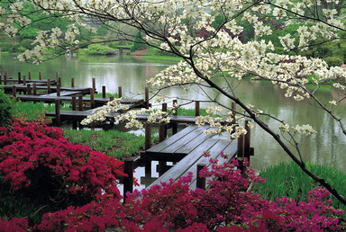 colour, deck, garden, japenese, lake