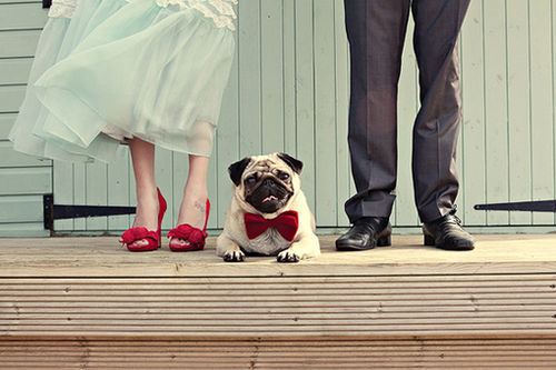 couple, cute, dog, fashion, love, married, shoes, wedding