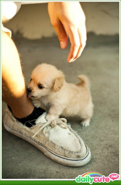cute, dog, dogd, doggie, leg, puooy <3, puppie, shoe