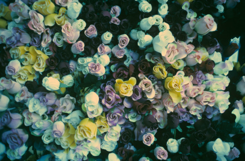 dark, flowers, pretty, vintage