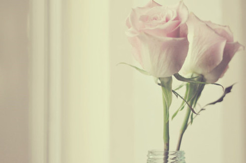 flowers, pink, pretty, roses, simple, vintage