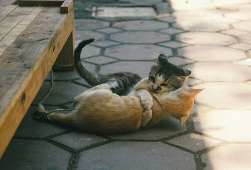adorable, animal, animals, awwwwwwwwm, cat, cats, couple, cute, hipster, hug, indie, love, summer