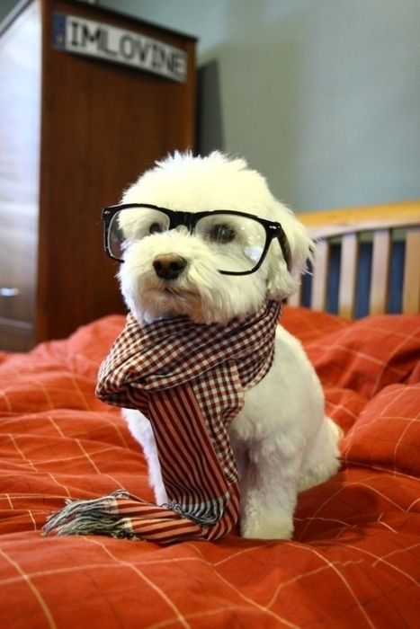 adorable, baby, cute, dog, hipster