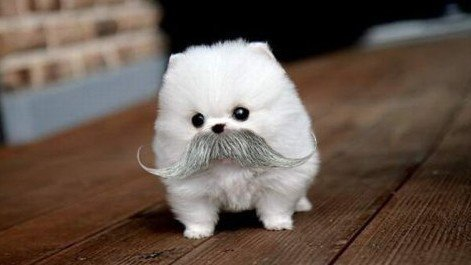adorable, costume, creative, cute, dog, fashion, funny, little, lol, love, moustache, puppy, small, summer