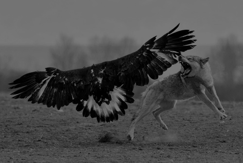 amazing, animals, black and white, fight, photo