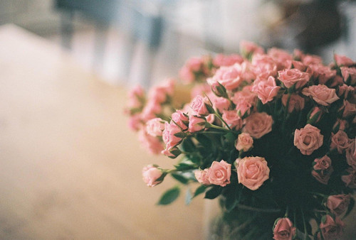 amazing, awesome, beautiful, beauty, bouquet, bunch, darling, flower, flowers, love, lovely, nature, photography, pink, roses, still life, stunning