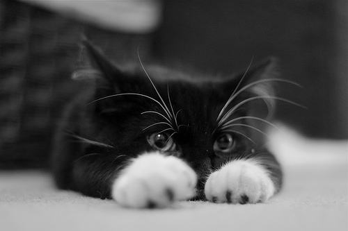 animal, animales, black, black and white, black cat, black kittens, cat, cute, djur, fofo, funny, gatinhos, hiding, inspiring, kitten, kity, meow, ninja cat, paws, so cute