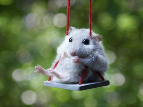 animal, balanco, cute, engracado, fofinho, fofo, funny, hamster, mouse, photo, ratinho, rato, verde