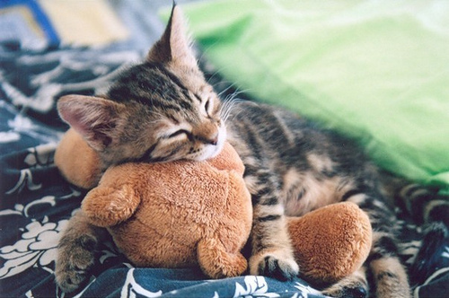 animal, beautiful, boy, cat, cute, girl, guy, kitten, photography, teddy bear, vintage