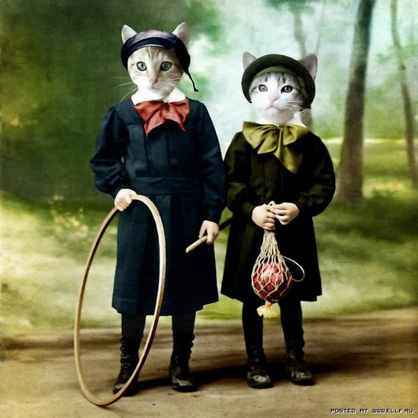 animals, cats, cute, humor, lol, vintage
