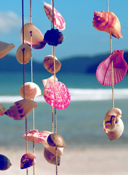 artistic, cute, photography, shells, summer, views, vintage