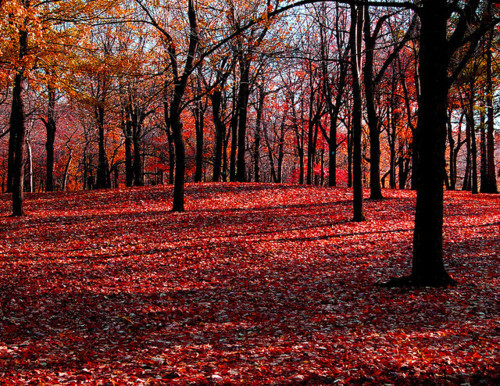 autumn, beautiful, fall, flowers, landscape, leaf, leaves, nature, photo, photography, red, trees