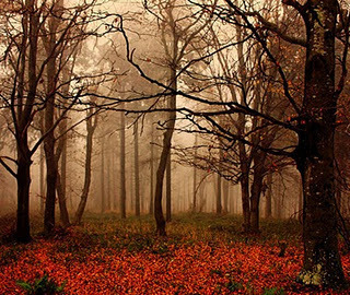 autumn, fall, fog, forest, leaves