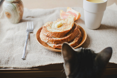 awesome, breakfast, cat, darling, delicious