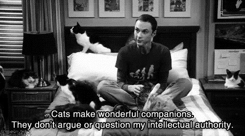 bbt, big bang theory, cat, cats, funny