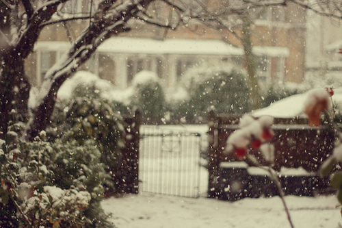 beautiful, flower, house, photo, photography, snow, street, winter