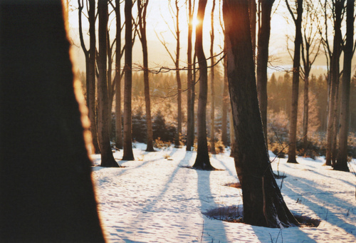 beautiful, forest, landscape, photography, sky, snow, sunset, trees, vintage, woods