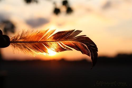 beautiful, happiness, photograpy, plume, sun