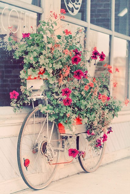 beauty, bicicleta, bike, coffee, colorful
