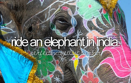 before i die, bucket list, bucketlist, elephant, india
