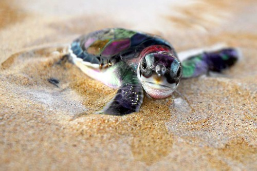 bikini, colors, colours, cute, girl, ocean, sand, summer, surf, turtle, wave