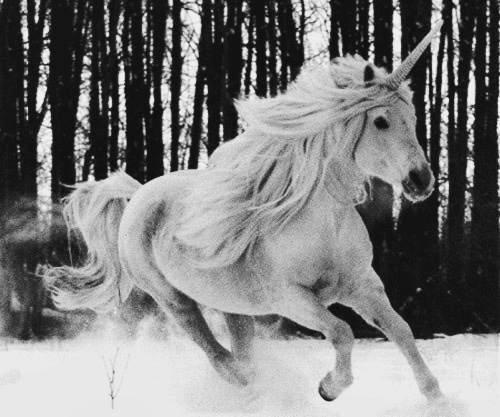 black and white, blackandwhite, fantasy, myth, snow