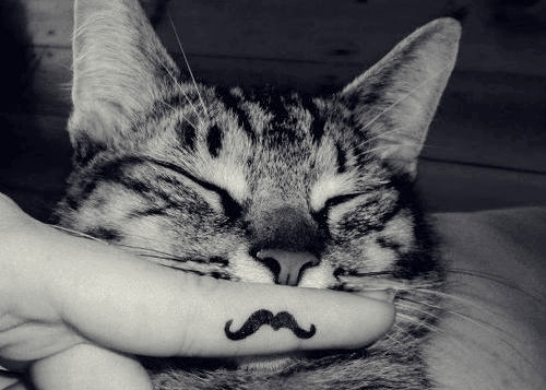 black and white, cat, cats, cute, cuty, funny, juhaero, kitten, kitty, mustache, nyan
