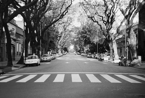 http://s2.favim.com/orig/35/black-and-white-city-taxi-trees-Favim.com-287700.jpg