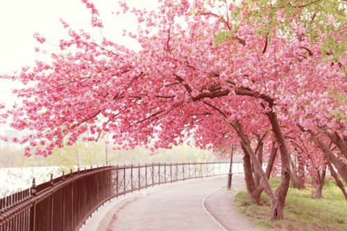 blossom, cute, flower, flowers, nature, pink, plant, pretty, tree, trees